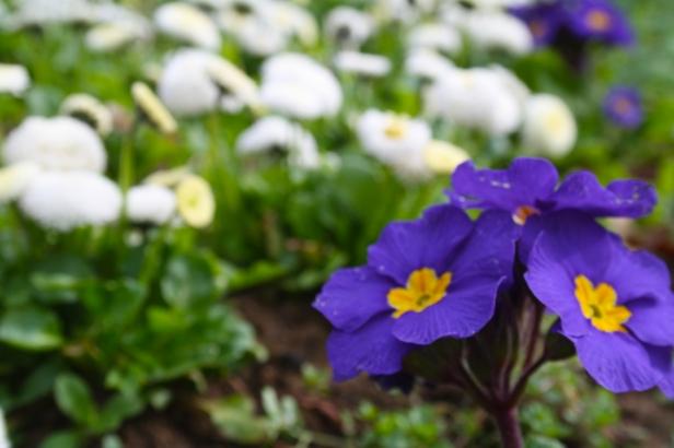 Beckets park - Flowers